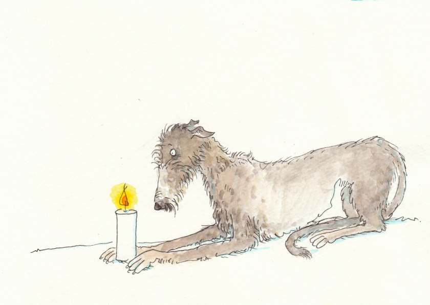 077deerhound1