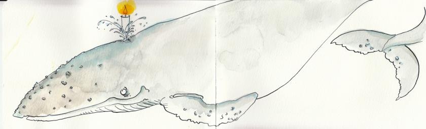 150buckelwal