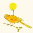 170kanarienvogel