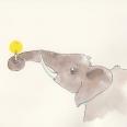 195elefant2