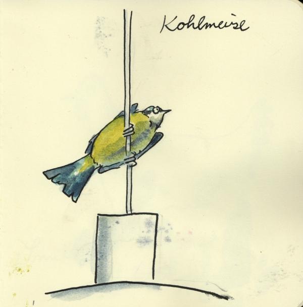 Kohlmeise87