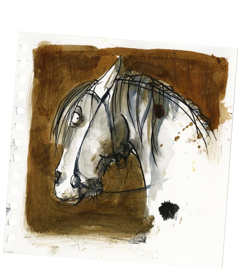Pferd2456.jpg